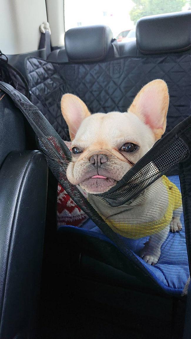 HAPPY BIRTHDAY🎂心夏ちゃん🎉|シオから巣立った子犬写真館