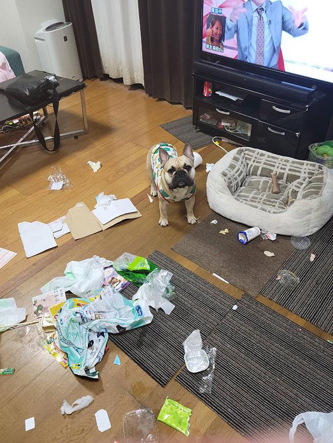 HAPPY BIRTHDAY🎂じんべいくん🎉 シオから巣立った子犬写真館
