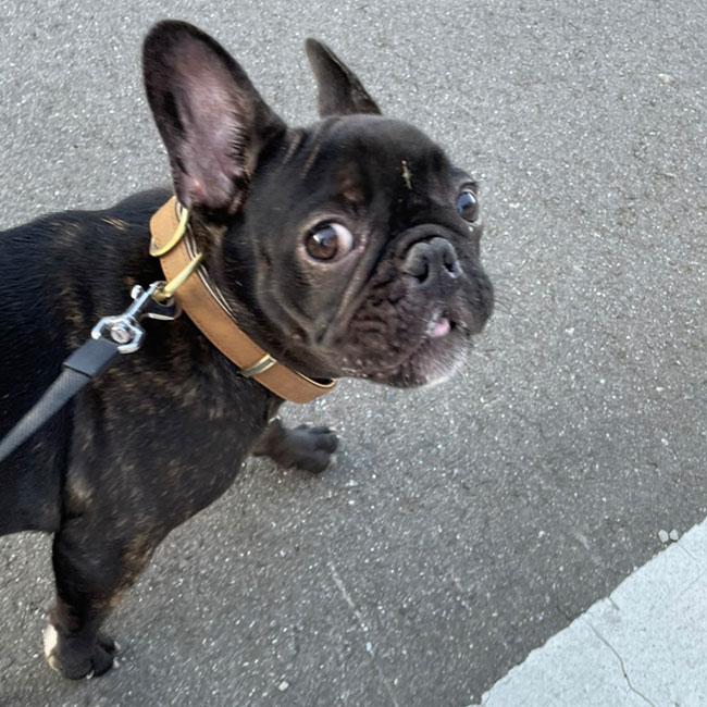 ひじきちゃんのご家族さんからお便り届きました😊|シオから巣立った子犬写真館