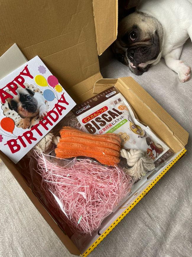 HAPPY BIRTHDAY🎂ポリコンちゃん🎉|シオから巣立った子犬写真館