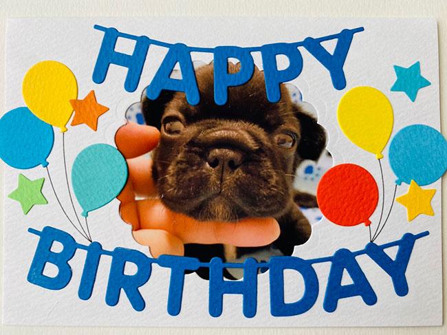 HAPPY BIRTHDAY🎂カブくん🎉|シオから巣立った子犬写真館