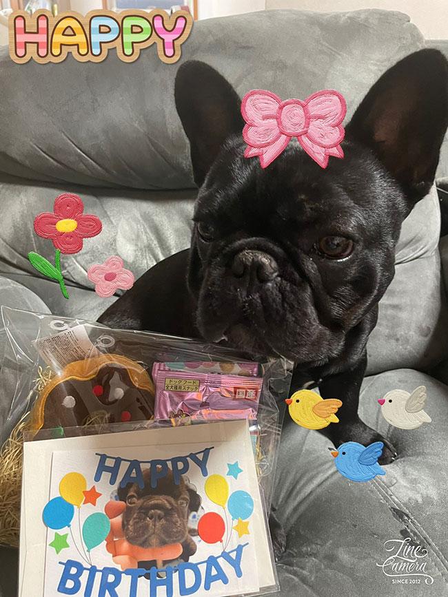 HAPPY BIRTHDAY🎂カブくん🎉 シオから巣立った子犬写真館