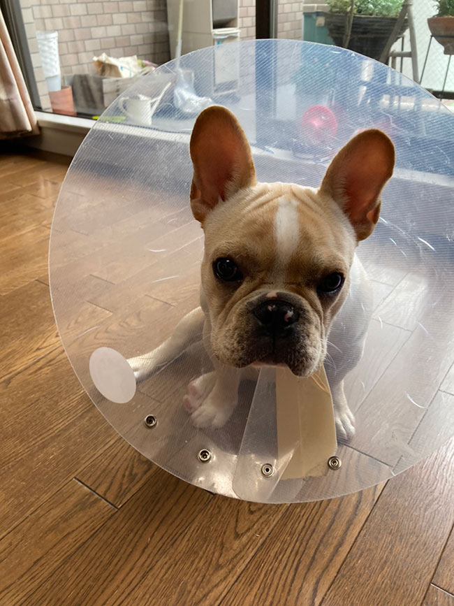 テディくんのご家族さんからお便り届きました😊 シオから巣立った子犬写真館