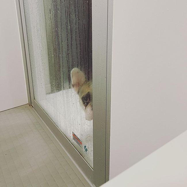 HAPPY BIRTHDAY🎂ナラちゃん🎉|シオから巣立った子犬写真館