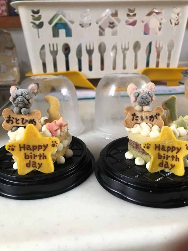 HAPPY BIRTHDAY🎂大翔くん🎉 シオから巣立った子犬写真館