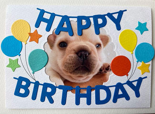 HAPPY BIRTHDAY🎂海くん🎉 シオから巣立った子犬写真館
