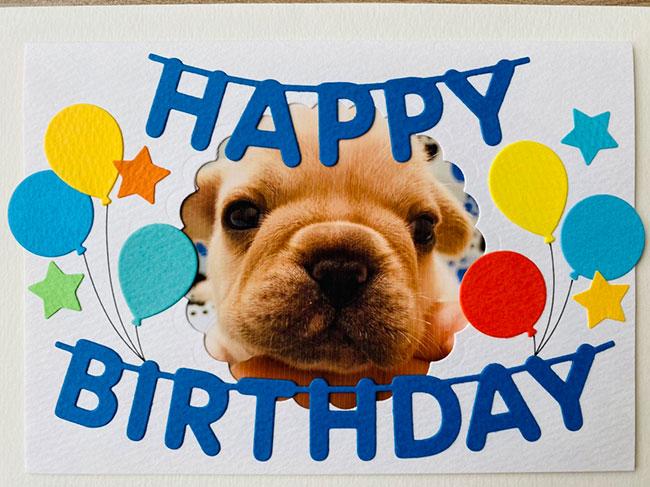 HAPPY BIRTHDAY🎂琥珀くん🎉|シオから巣立った子犬写真館