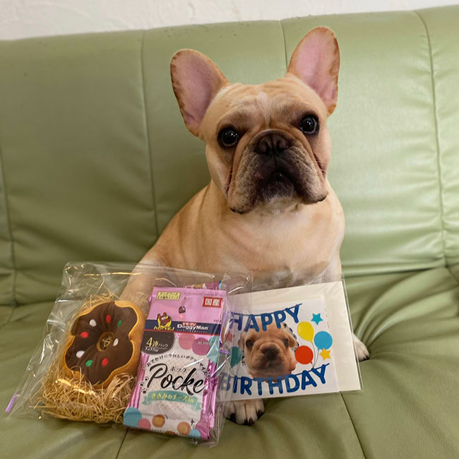 HAPPY BIRTHDAY🎂琥珀くん🎉 シオから巣立った子犬写真館