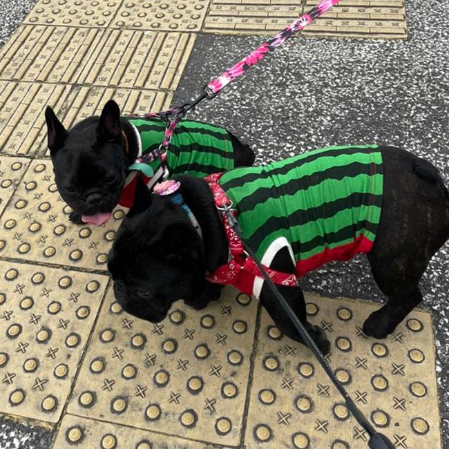 HAPPY BIRTHDAY🎂PUAちゃん🎉|シオから巣立った子犬写真館