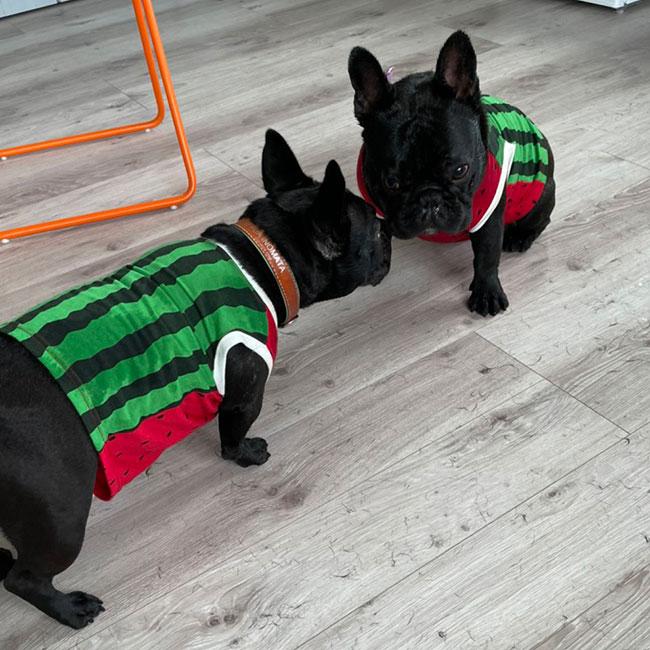HAPPY BIRTHDAY🎂PUAちゃん🎉 シオから巣立った子犬写真館