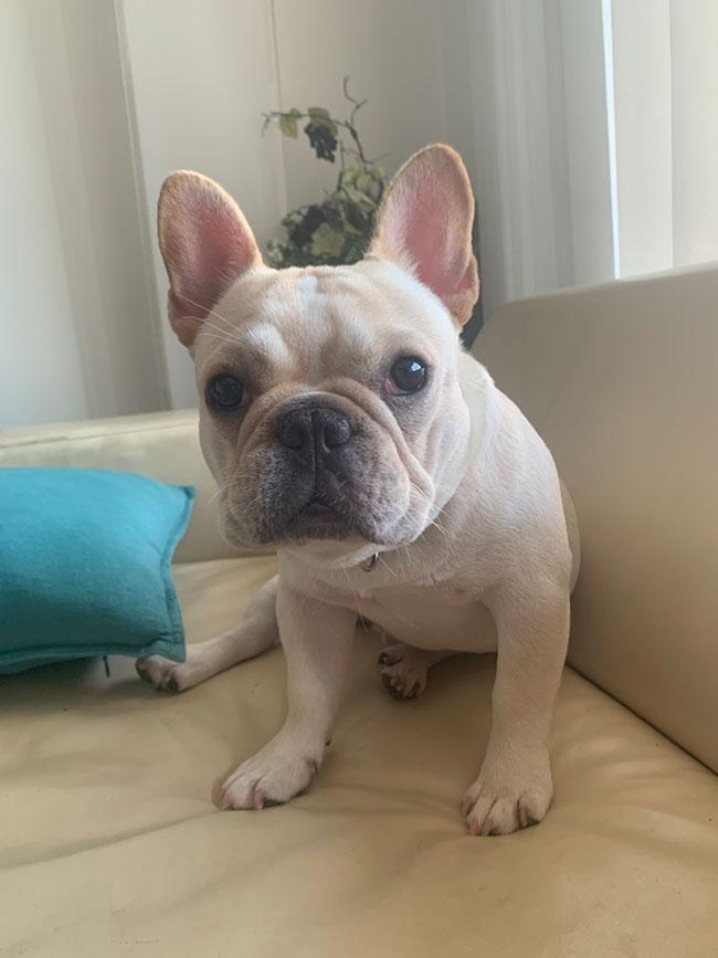ぱんだこくんのご家族さんからお便り届きました😊 シオから巣立った子犬写真館