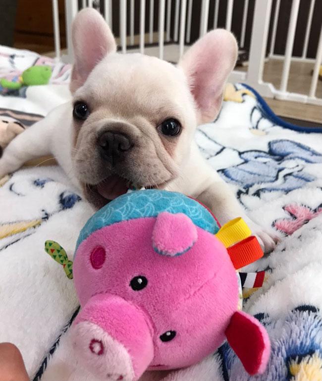 ギョロくんのご家族さんからお便り届きました😊|シオから巣立った子犬写真館