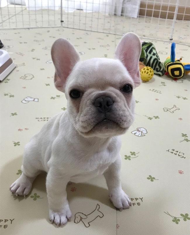 ギョロくんのご家族さんからお便り届きました😊 シオから巣立った子犬写真館