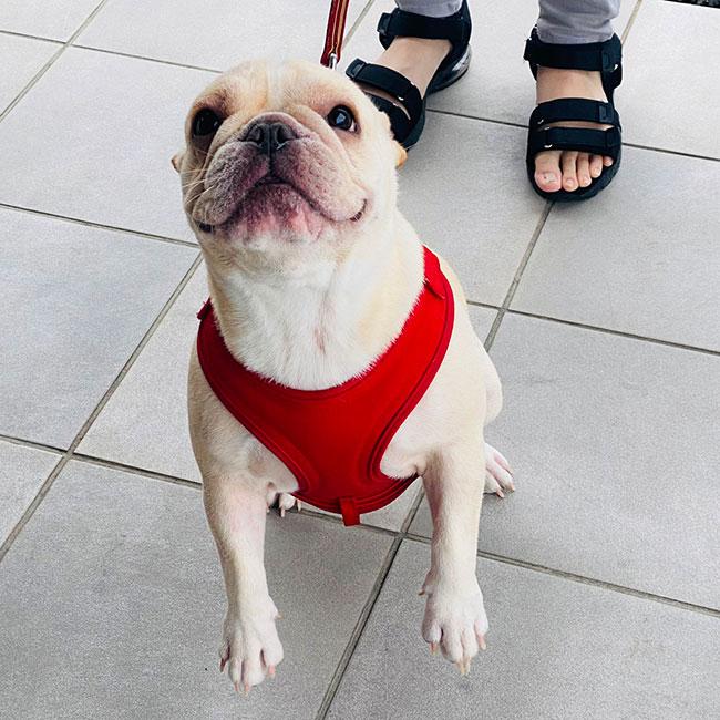コアちゃん&ご家族さんとバッタリお会いしました😊 シオから巣立った子犬写真館