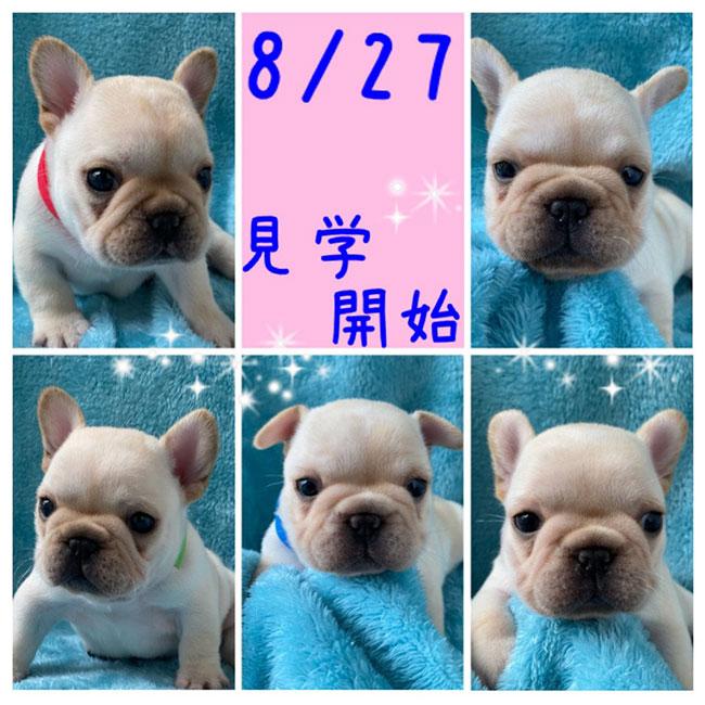 7/23生まれ玉露ママ&梅雄パパの赤ちゃんの見学を開始します😊 新着情報と出産のお知らせ