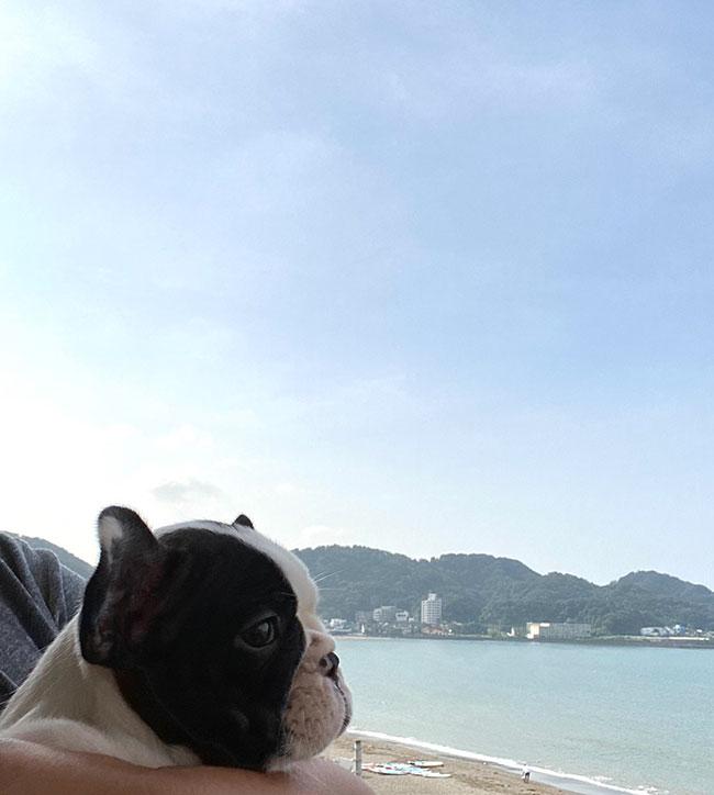 Ainaちゃんのご家族さんからお便り届きました😊|シオから巣立った子犬写真館
