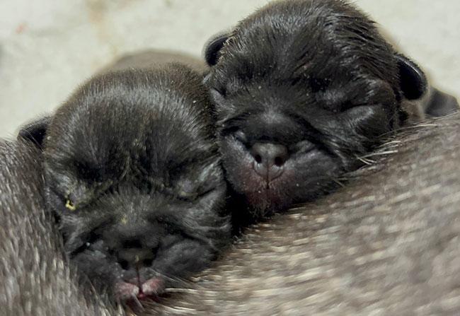 かかこママ&梅雄パパの赤ちゃんが生まれました😊 新着情報と出産のお知らせ