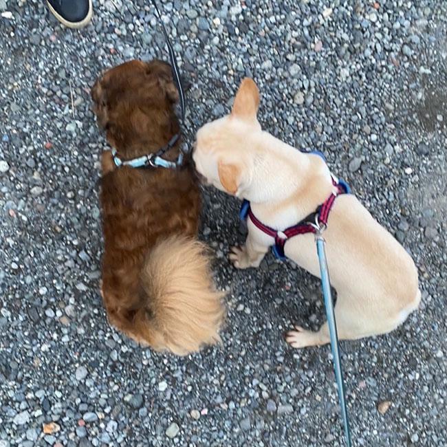 だいずくんのご家族さんからお便り届きました😊 シオから巣立った子犬写真館