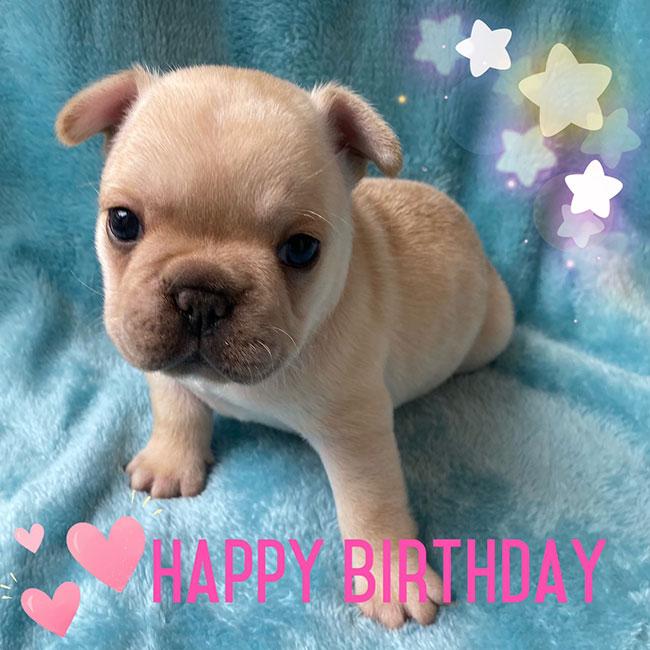 HAPPY BIRTHDAY🎂つぼみちゃん🎉 シオから巣立った子犬写真館