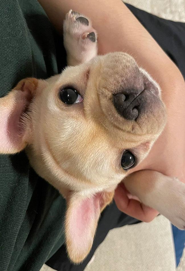 輪太くんのご家族さんからお便り届きました😊|シオから巣立った子犬写真館