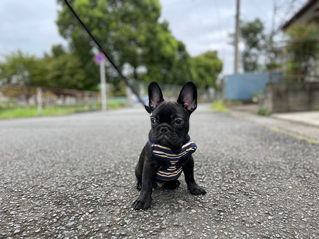 オレオくんのご家族さんからお便り届きました😊 シオから巣立った子犬写真館