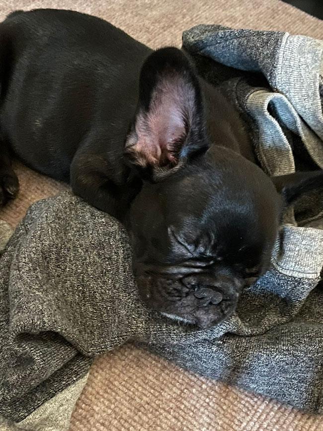 クラムくんのご家族さんからお便り届きました😊 シオから巣立った子犬写真館