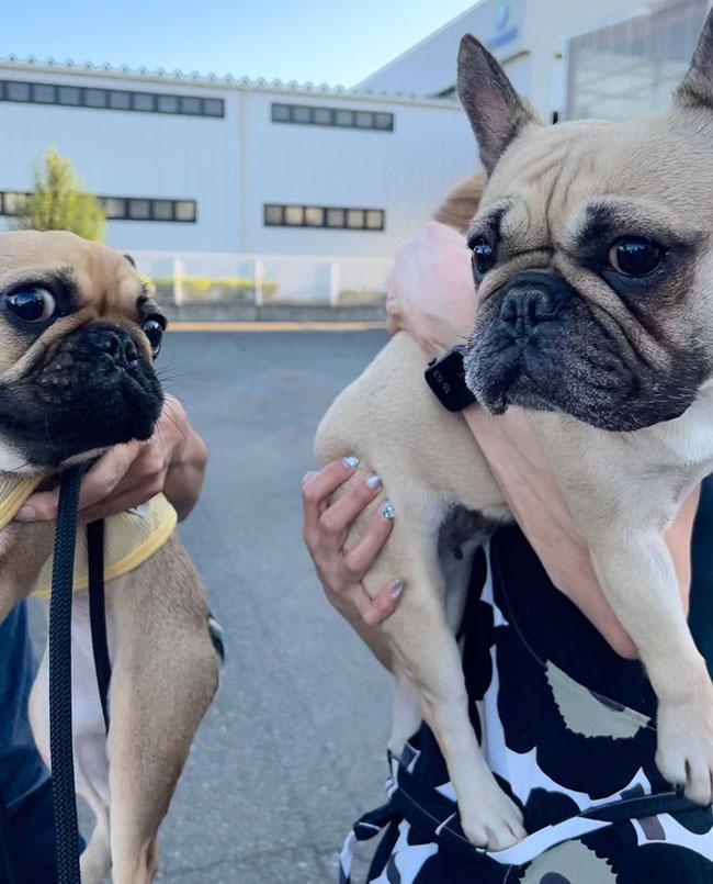 うなじゅうちゃんのご家族さんとお会いしました😊 シオから巣立った子犬写真館