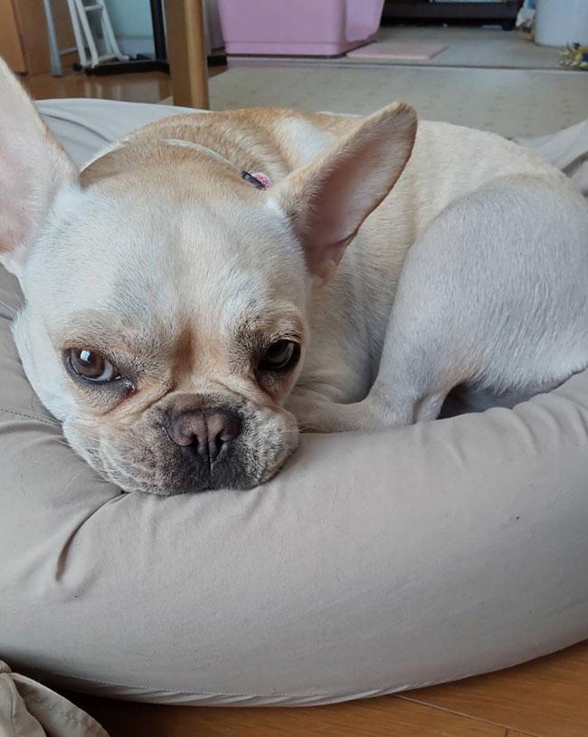 つぼみちゃんのご家族さんからお便り届きました😊 シオから巣立った子犬写真館