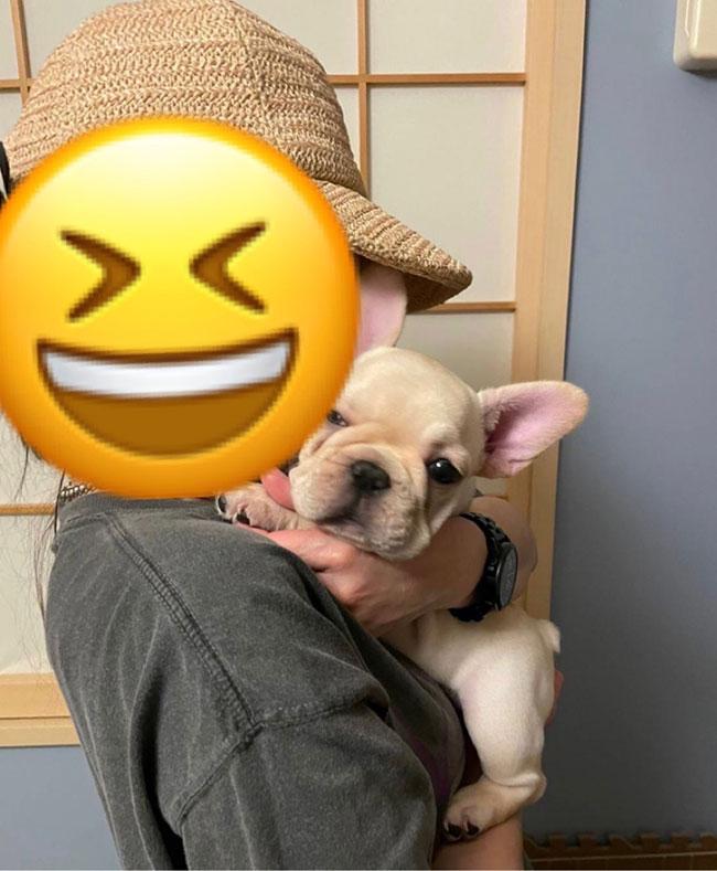 ニコくんのご家族さんからお便り届きました😊 シオから巣立った子犬写真館
