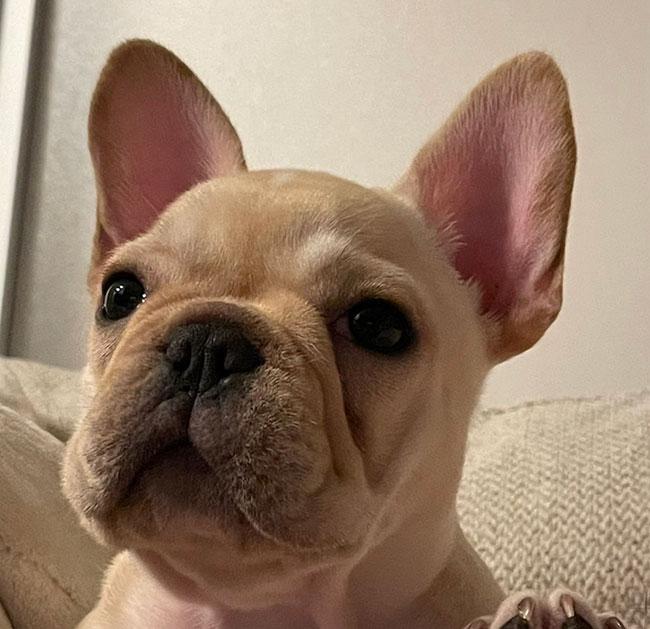 輪太くんのご家族さんからお便り届きました😊 シオから巣立った子犬写真館