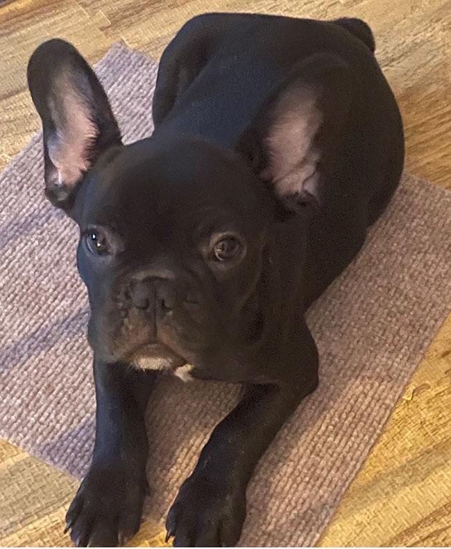 クラムくんのご家族さんからお便り届きました😊|シオから巣立った子犬写真館