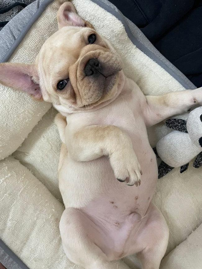 大豆くんのご家族さんからお便り届きました😊 シオから巣立った子犬写真館